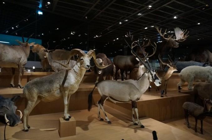 아프리카 평원을 누비는 다양한 포유류를 만날 수 있는 3층 전시실. - 도쿄=이우상 기자 idol@donga.com 제공